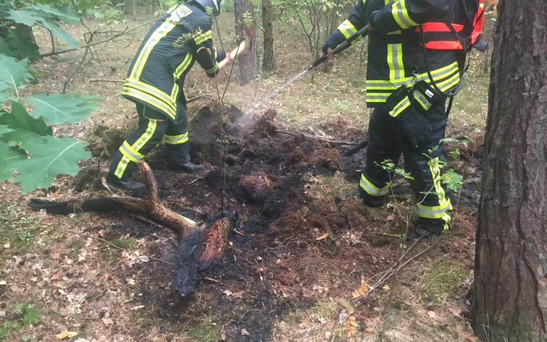 Entstehungsbrand im Wald