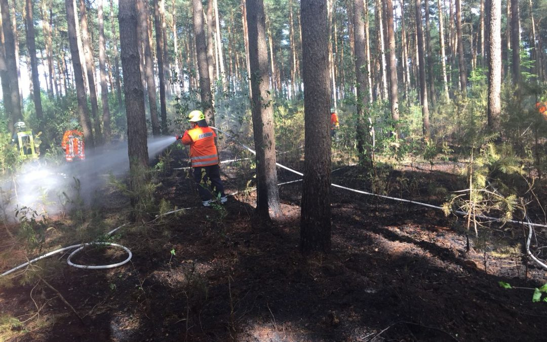 Waldbrand 1000 m²