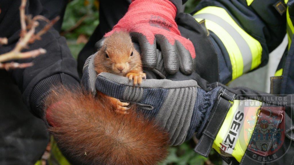 Eichhörnchen gerettet